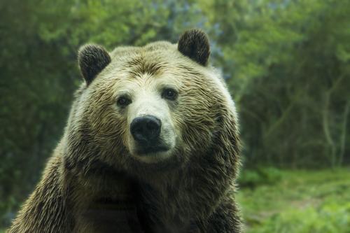 В Якутии 84-летняя бабушка столкнулась в лесу с медведем и одна смогла отпугнуть хищника