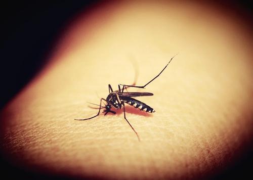 В Турции зафиксировали опасный вид комаров