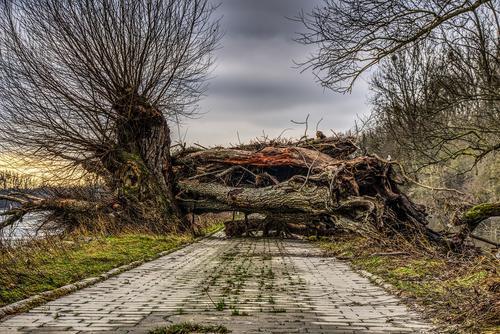 На северо-западе Москвы на припаркованный автомобиль рухнуло дерево