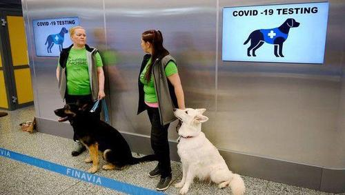 В аэропорту Хельсинки собаки начали «вынюхивать» коронавирус у пассажиров