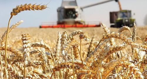 Урожай зерна в России превысит 122 млн тонн