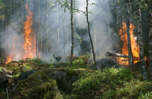 В МЧС рассказали, что ситуация с природными пожарами в Воронежской области тяжелая