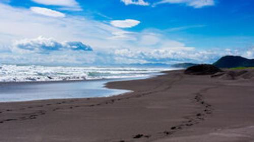 СК России начал проверку после гибели морских животных на Камчатке