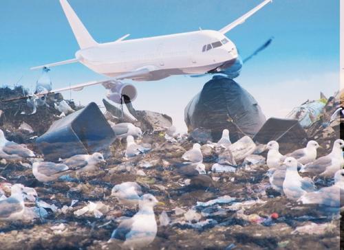 Горы мусора у аэропортов: чем они опасны и что делают с ними власти