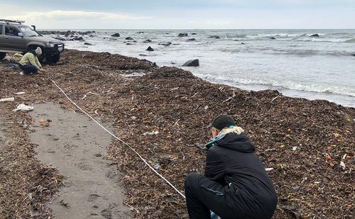 «Свежо предание, да верится с трудом». Большинство россиян из соцсетей не признают теорию о токсичных водорослях в Авачинской бухт