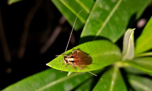 Живого таракана в упаковке с булкой нашла жительница Подмосковья