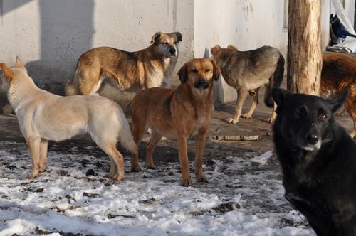 В иркутском приюте животных умерщвляли путём замораживания