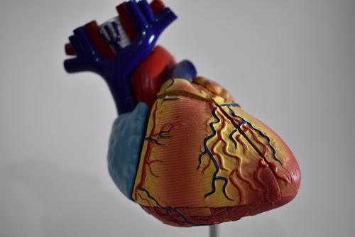 Испанские ученые назвали простой способ самостоятельной проверки здоровья сердца
