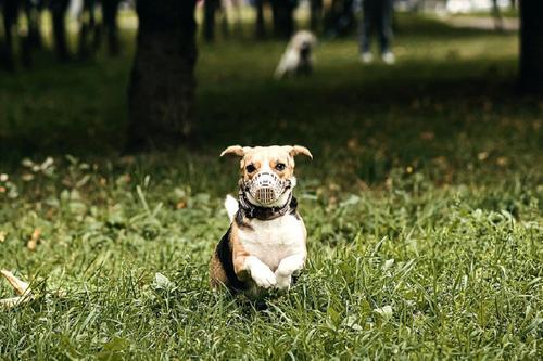 В России могут запретить изымать за долги домашних животных