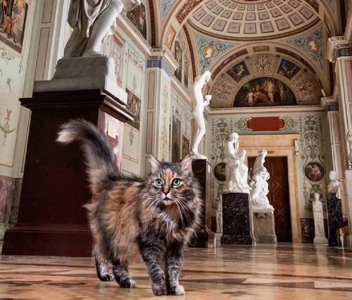 Коты, живущие в Эрмитаже, скоро получат наследство из Франции