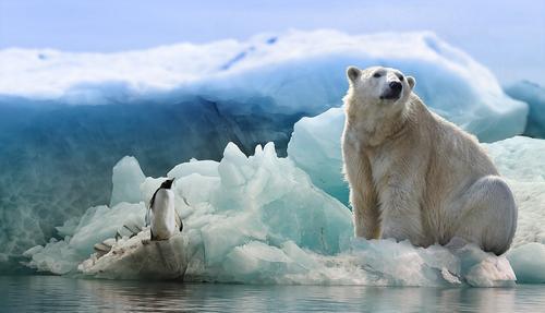 Шведская журналистка описала планы РФ на Арктику фразой из мульфильма «Маша и Медведь»