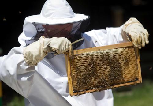 Пчёлы совместно с дронами занимаются поиском мин на Балканах