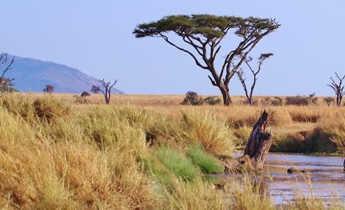 В Роспотребнадзоре рассказали о случаях завоза малярии из Танзании