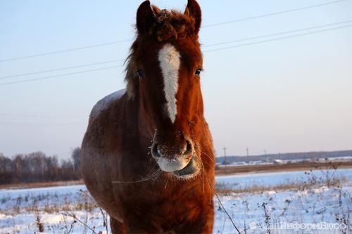В Екатеринбурге могут запретить «покатушки» на животных
