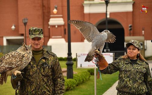 Соколы и ястребы останутся охранять Кремль и Белый дом от голубей и ворон