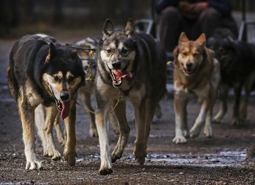 Как решить проблему бродячих собак