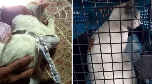 Кота-наркокурьера задержали с поличным
