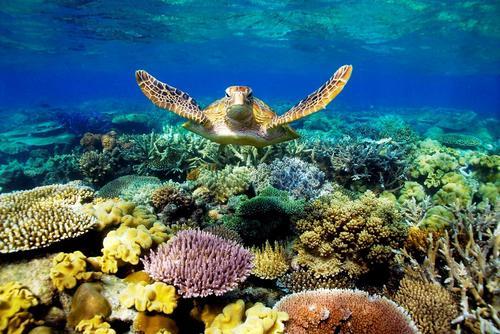 Власти Австралии за защиту и оздоровление океанов