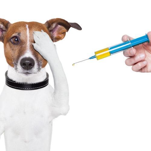 В России выпустили первую партию вакцины от коронавируса для животных