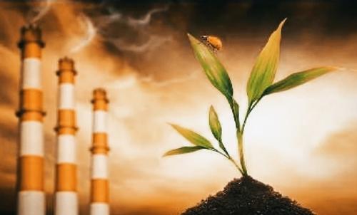 Как деятельность человека изменяет жизнь растительности