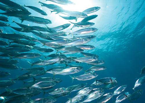 ЕС пытается лишить Москву и Пекин арктической рыбы?