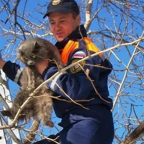 Как спасатели выручают попавших в беду животных