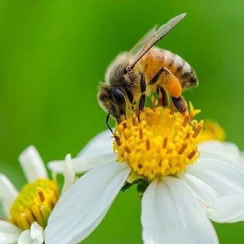 Американские ученые обнаружили в мёде, произведенном пчелами на территории США, цезий-137