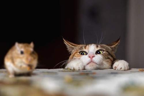 В Чикаго тысяча бездомных кошек защищают улицы от нашествия крыс
