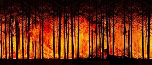 Из-за лесного пожара перекрыли движение на трассе «Екатеринбург – Тюмень»