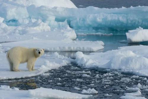 Мазут заменят на СПГ: арктические экологи написали очередное воззвание к мировым политикам
