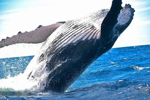 В США дайвер попал в пасть кита и выбрался невредимым