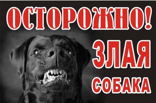 Куда и как жаловаться по поводу бродячих животных, собак без намордников, как получить компенсацию за укус