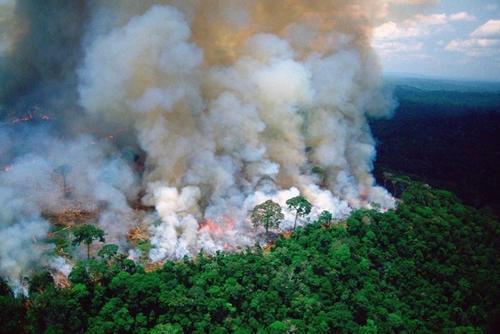 С лесными пожарами в России борются занижением потерь