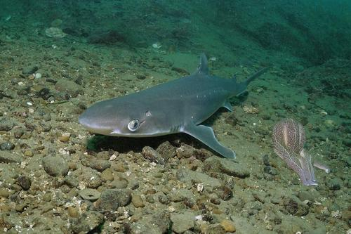 Из-за изменения климата еще один вид крупных рыб находится под угрозой исчезновения