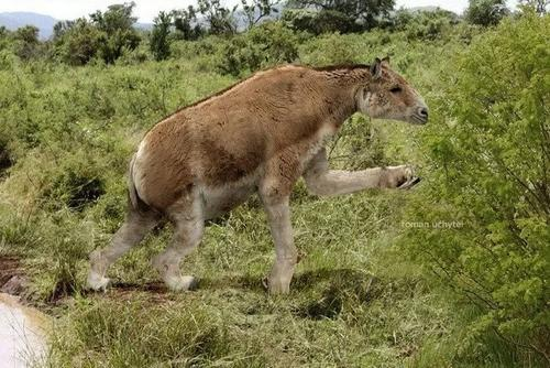 О халикотериях - гибридах обезьян и лошадей, живших за миллионы лет до нашей эры