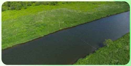 На Сахалине браконьеры перекрыли реку Мануй сетями в самый нерест тихоокеанского лосося