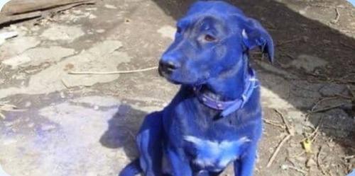 Река под Владимиром окрасила собаку в синий цвет