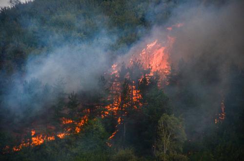 Россия и Украина прислали самолеты для борьбы с лесными пожарами в Турции