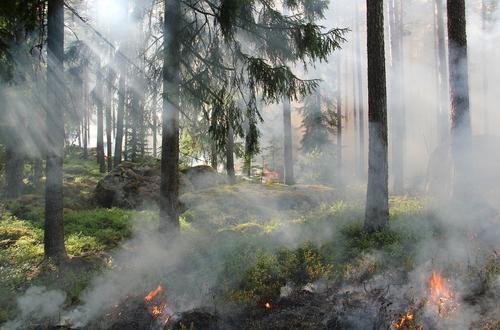 Организация «Дети огня» взяла на себя вину за лесные пожары в Турции