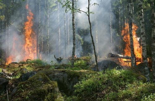 В тушении лесного пожара на Родосе задействовали российский самолёт Бе-200