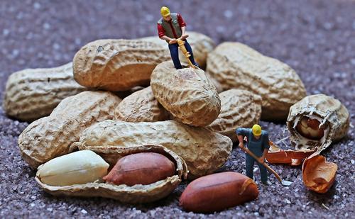 Ученые уверены, что чрезмерное употребление арахиса  опасно тем, что способствует распространению рака