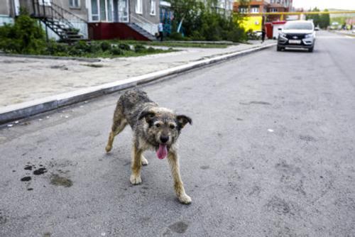 Жителя Челябинской области на три года осудили за убийство собаки