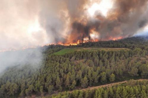 Огонь уничтожил уникальный заповедник во Франции