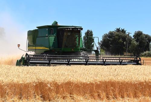 Свободная пресса: Между Россией и Украиной идет хлебная война, Египет купил у украинцев в четыре раза больше зерна, чем у россиян