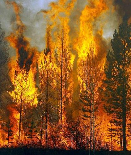 Greenpeace назвал 2021 год рекордным по площади лесных пожаров в России с начала века