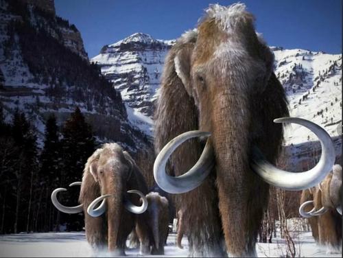 На воскрешение мамонтов потратят 15 миллионов долларов