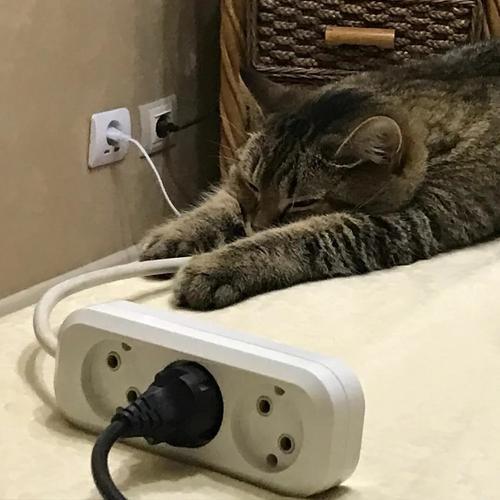 Розетка – высшая форма опасности для кошек