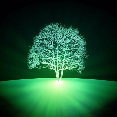 В Массачусетсе придумали, как сделать светящимися живые растения — они могут освещать города в ночное время