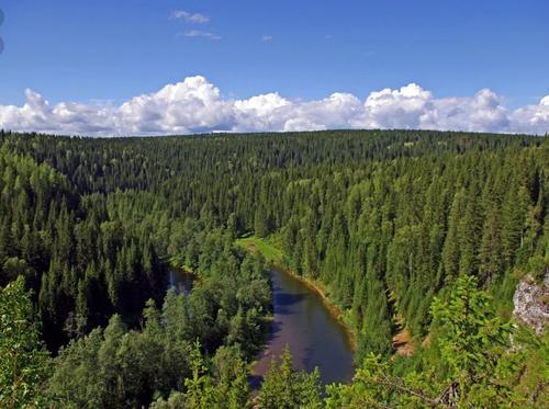 Как потепление влияет на сибирские леса и можно ли их сохранить
