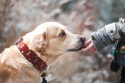 Жителей Подмосковья оштрафовали за неправильный выгул собак на  200 тысяч рублей